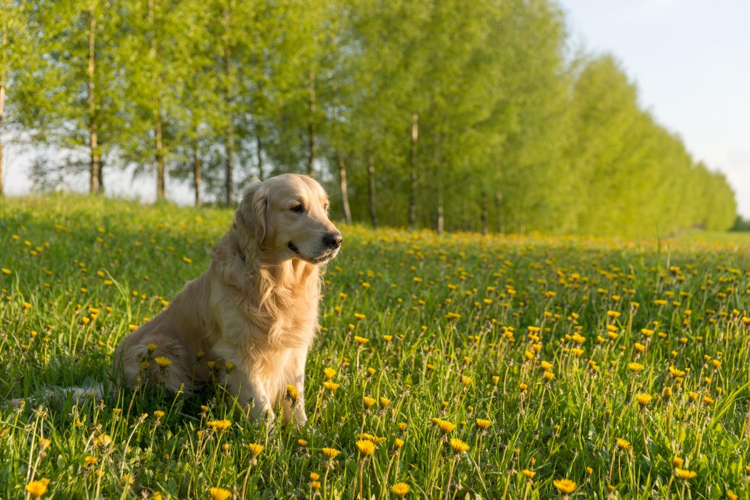 Best Dogs For Inexperienced Owners
