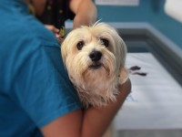 Why bring your pet to the vet clinic regularly
