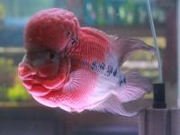 Common aquarium fish diseases and how to identify them