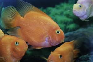 overcrowded aquarium