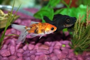 5 Common Aquarium Fish Diseases And How To Identify Them