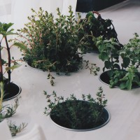 plants-789657_1920