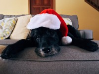 Tips on protecting your pet's health this Christmas