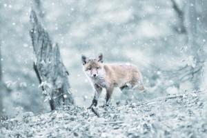 animal in winter