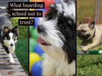 Red flags of pet daycare and boarding centers