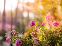 Garden tips to transform your backyard this spring