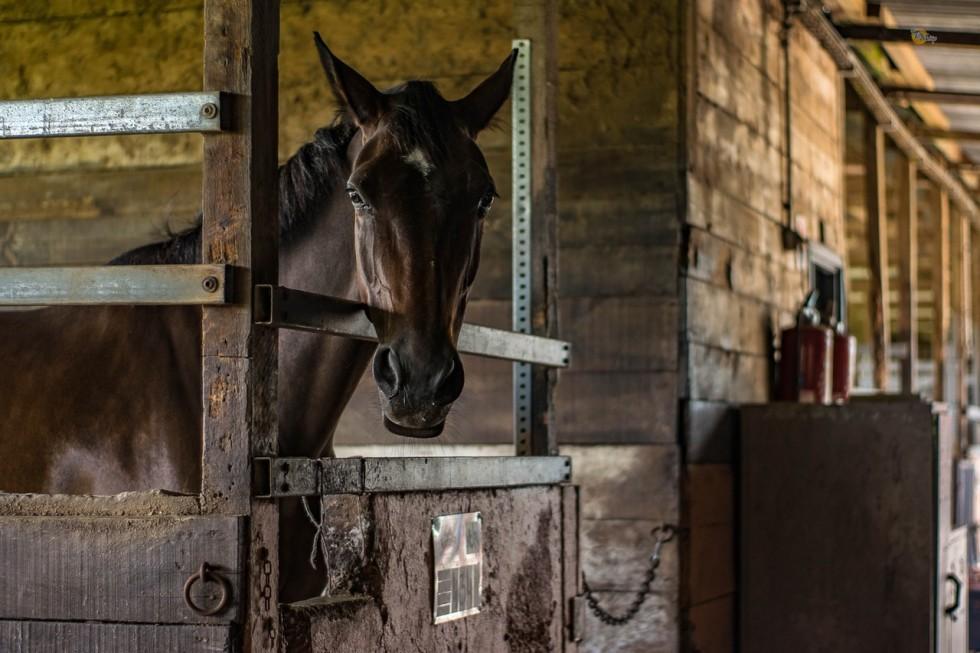 horse boarding facilities cover