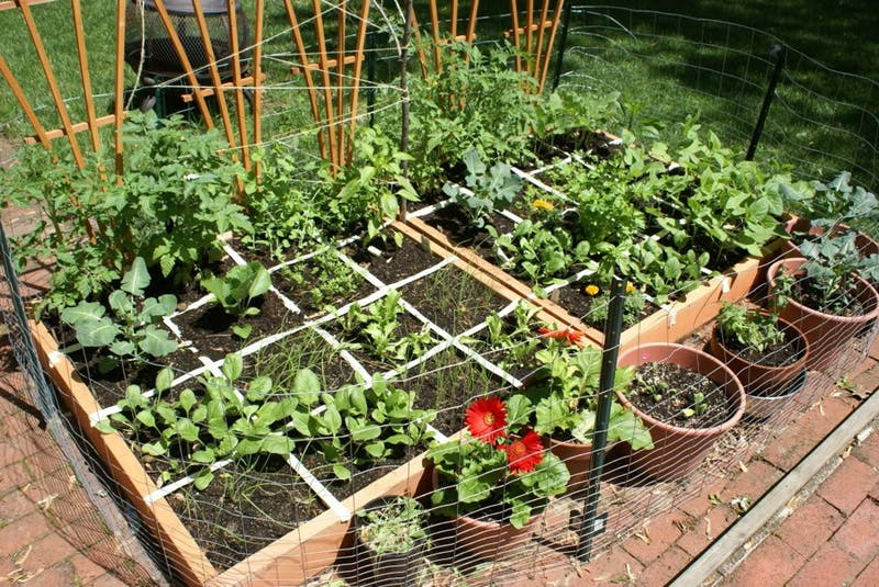How to deal with vegetable garden layout in tight space ...