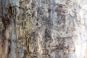 consequences of termite control neglect