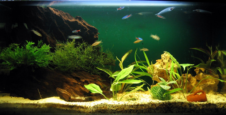Aquariumsimple