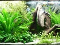 Fish tanks for dummies: essential aquarium checklist