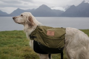 dog with a bag on its back