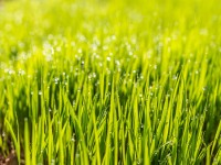 The Advantages of a Lawn Irrigation System