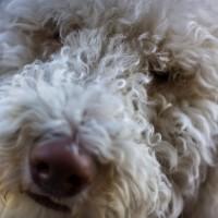 dog-696840_1920