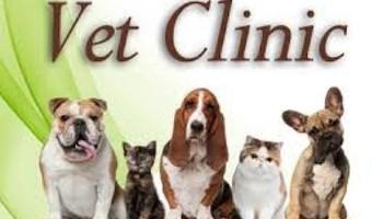 Dog nurse/vet babysit,cut nails, teeth care, ear care (Open NYC)