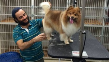 Free full dog grooming for long hair dogs