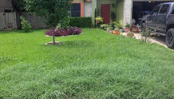 Landscape Services & Lawn Maintenance