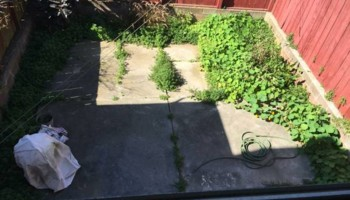 Gardening /Cleanouts