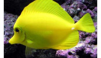 Aquarium Service, Aquarium Leasing, Aquarium Maintenance (northtexasaquarium)