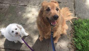 Devoted & Trustworthy Pet Sitter, Dog Walker - Reasonable Rates $25!