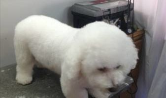PET GROOMING PROFESSIONAL WORK AFFORDABLE PRICES DISCOUNTS NEW CLIENTS