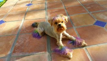 Professional dog grooming! Northridge CA