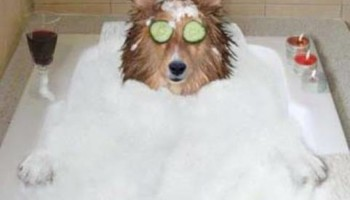 PUPPY SUDS dog grooming and bathing