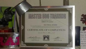 MASTER DOG TRAINING - Obedience, Potty, and Behavior Modification $60