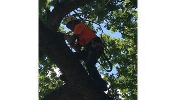 TREE TRIMMING AND TREE REMOVAL ETC.