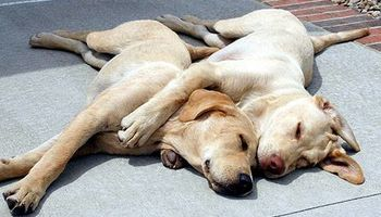 2Pups Pet Services. Pet Sitting in Your Own Home!