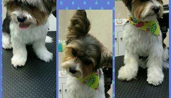 Dog Walker & Pet Grooming