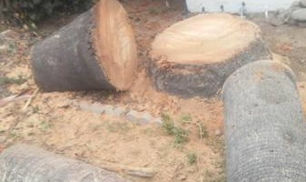 George's Tree Service - pruning, cutting and trimming
