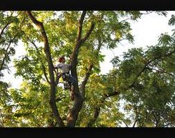 Arborist Matt. Tree Trimming