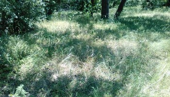 All In 1 Mowing- residual and commercial, cheap prices, open scedule
