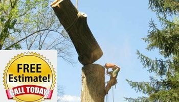 Bill Mann's Tree Removal and Landscaping Services