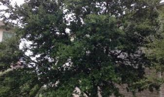 Silver Tree Service/ lowes prices