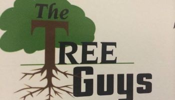 The Tree Guys of Illinois your tree experts