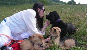 DAWN'S DOG RETREAT-BOARDING & DAYCARE