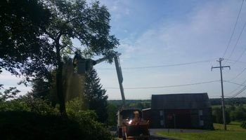 Free estimates for tree service and property clean up