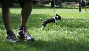 Your friendly neighborhood dog walker - The Dog Dude