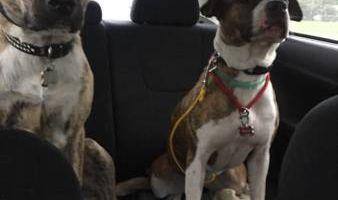 Dog training and Rehabilitation
