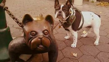 Dog Walking & Pet Care ( PEPPIE PAWS PET CLUB)