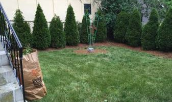 Landscaping arborvitae and planting specials!!