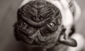 Unique Pet Portraits