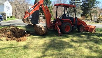 Tree Stump Removal-Tree Removal-Landscaping