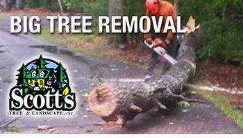 BIG Tree Removal