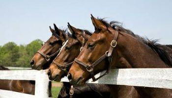 HORSE CORRALS INSTALLATION UPGRADES & REPAIRS.
