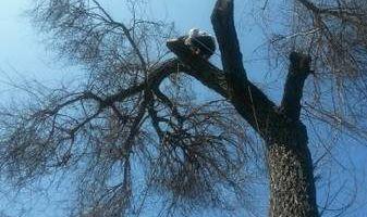 TREE TRIMMING , TREE REMOVE ,TREE SERVICE