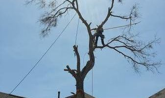 Tree Trimming, Removal, Replacement