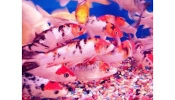 Yo Aquarium